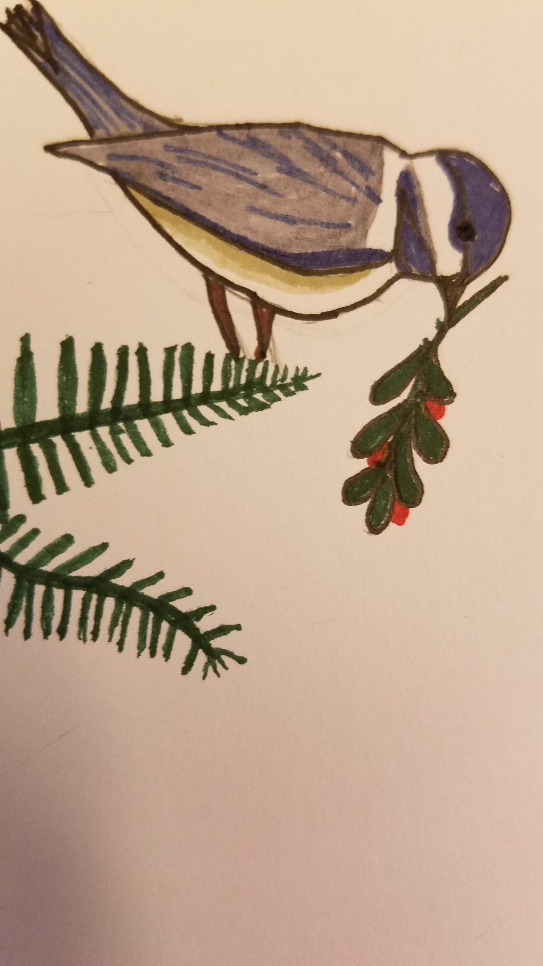 chickadee-holding-holy-sprig-with-berries-on-pine-branch